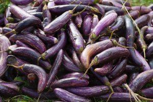 eggplant Yoshiharu Doi