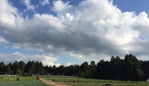 ザファームキャンプ(農園のなかのキャンプ場)で野菜の収穫体験に参加しました。