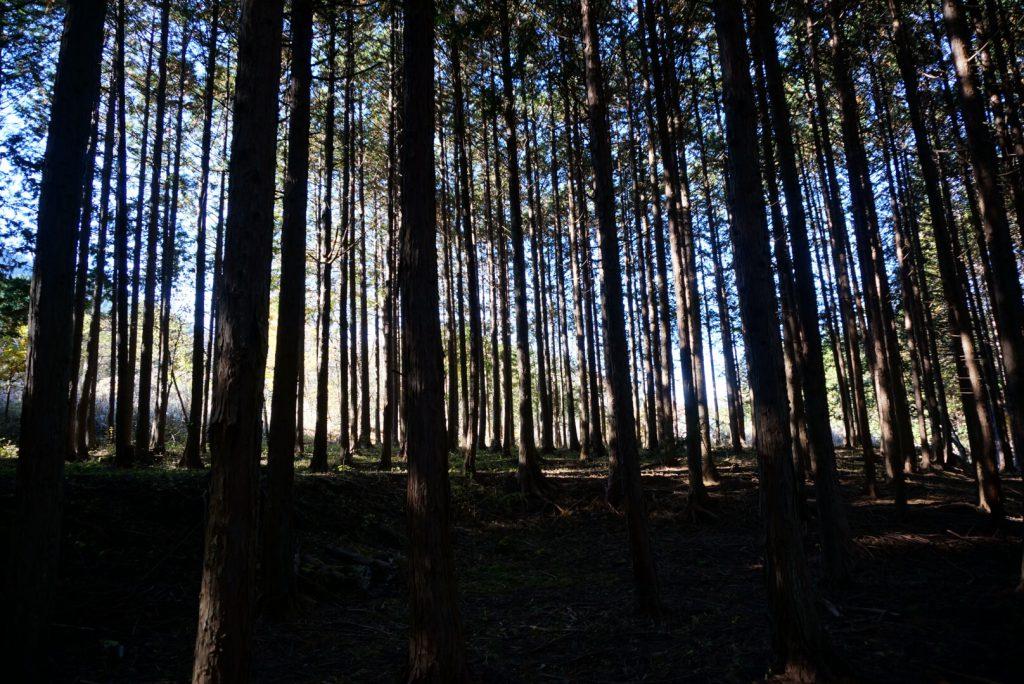 都留戸沢の森 和みの里キャンプ場