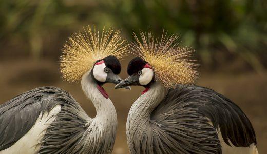 【感想】「おしどり夫婦」ではない鳥たち(濱尾章二著)