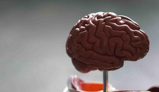 脳のクセを知るためにおすすめしたい本 3選